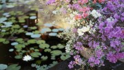 Flowers and Gardens HQ wallpapers Collection 1 Ec1168108222607