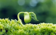 Green Plants Birth HD Wallpapers Ddd4f2108974278