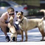 Kellan Lutz walking his dogs July 23rd 3e71e189844939